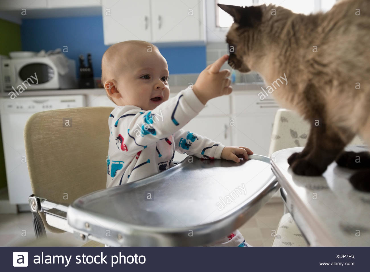 Baby boy high chair petting cat kitchen - Stock Image