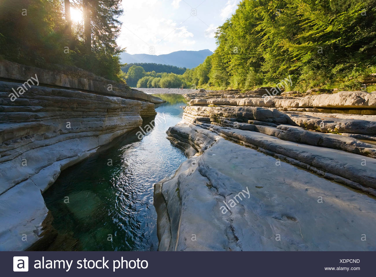 River flowing through forest, Taugl, Tennengau, Salzburg, Austria Stock Photo