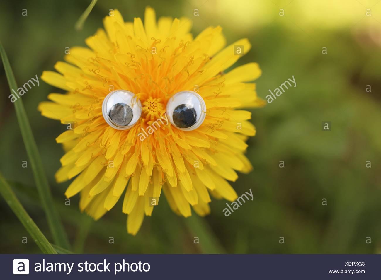 Plastic Eyeballs On Yellow Flower Head - Stock Image
