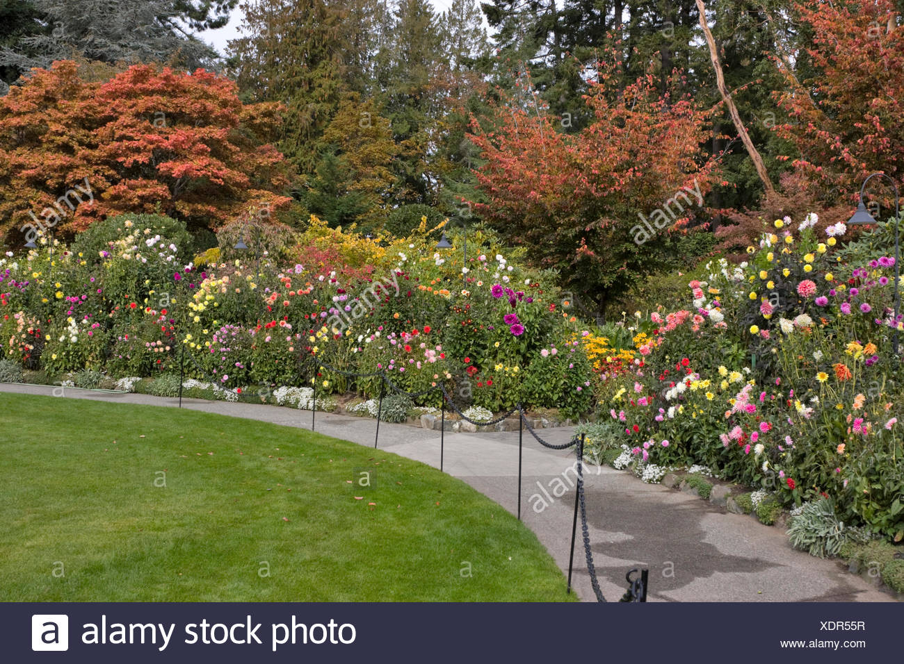 BUTCHART GARDENS DAHLIA BORDER BY THE CONCERT LAWN IN AUTUMN Stock ...