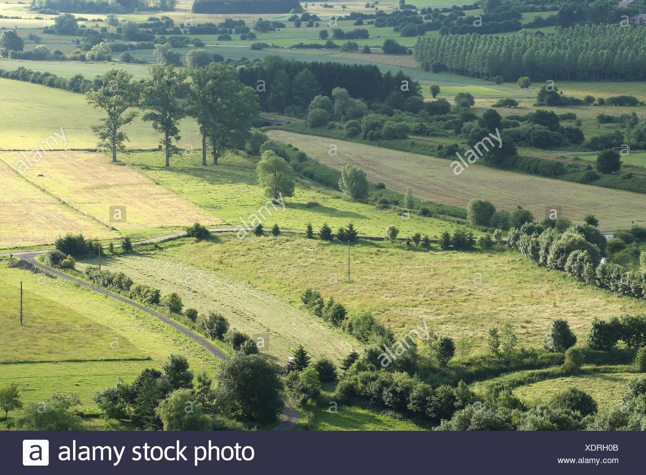 Bocagelandschap met hagen en bomen, Viroinvallei, Belgi Bocage landscape with hedges and trees, valley of Viroin, Belgium - Stock Image