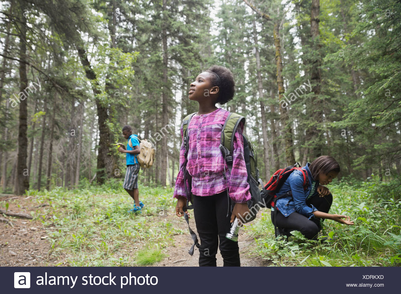 Siblings exploring in forest - Stock Image