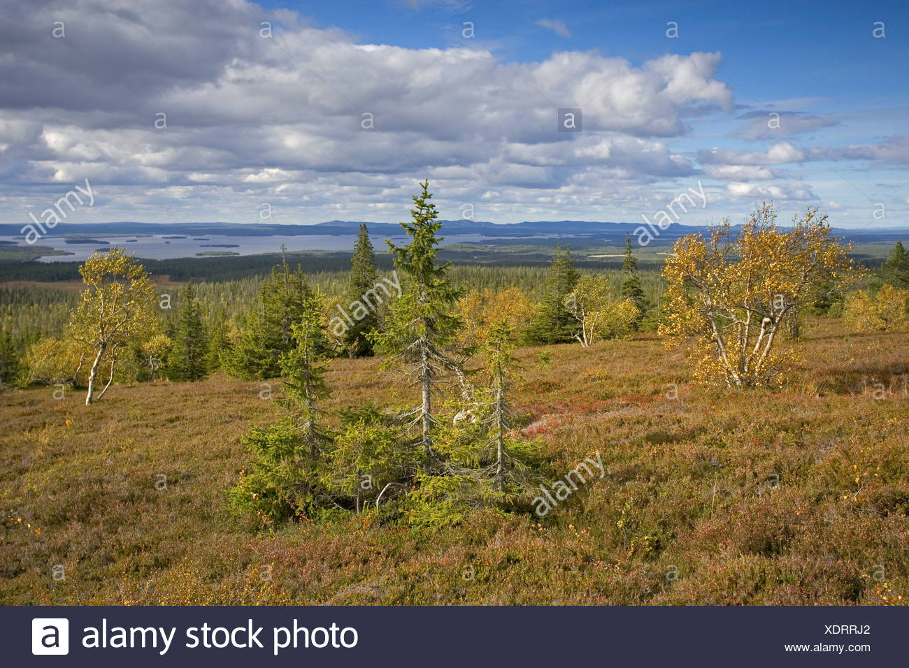 Riisitunturi National Park in autumn, Finland, Scandinavia, Europe - Stock Image