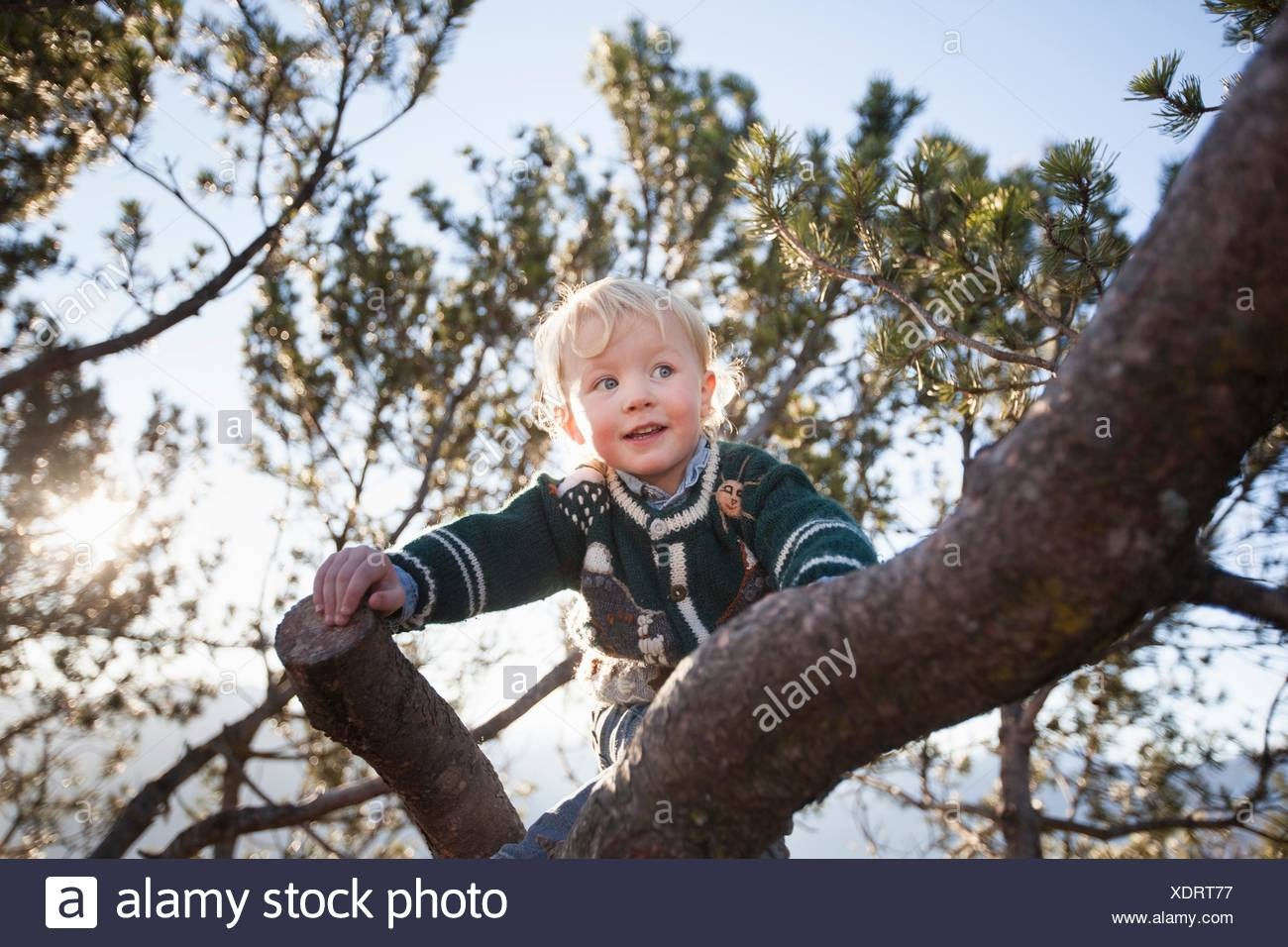 Happy female toddler climbing tree in forest - Stock Image