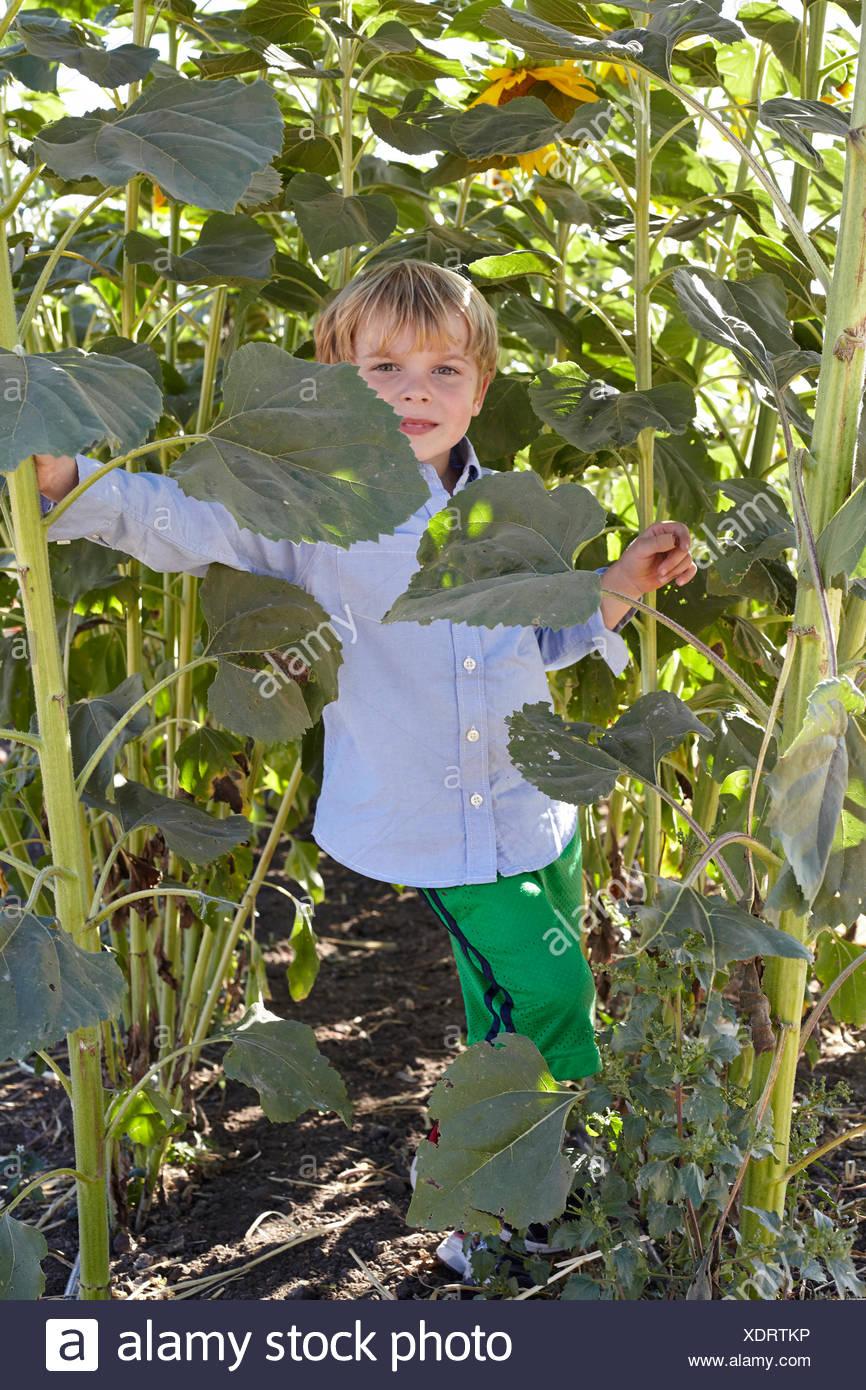 Portrait of smiling boy in sunflower field - Stock Image