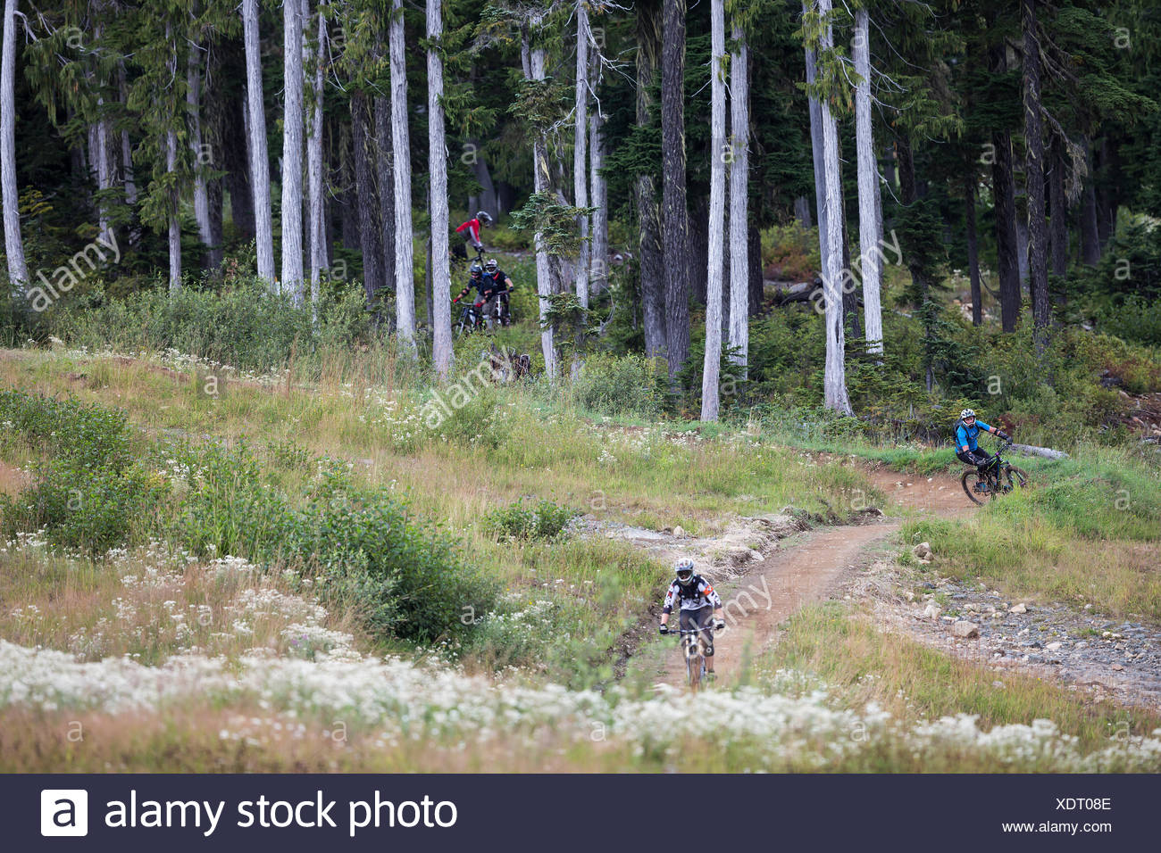 A group of mountain bikers emerges from the forest at the bottom of a trail at Mt. Washington, The Comox Valley, Vancouver Island, British Columbia, Canada - Stock Image
