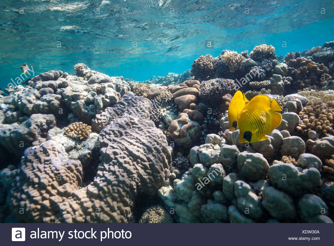 Coral reef - Stock Image