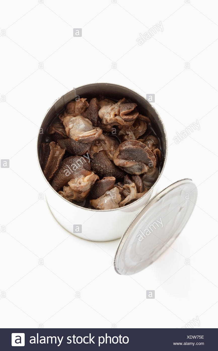 Preserved snails in tin can on white background - Stock Image