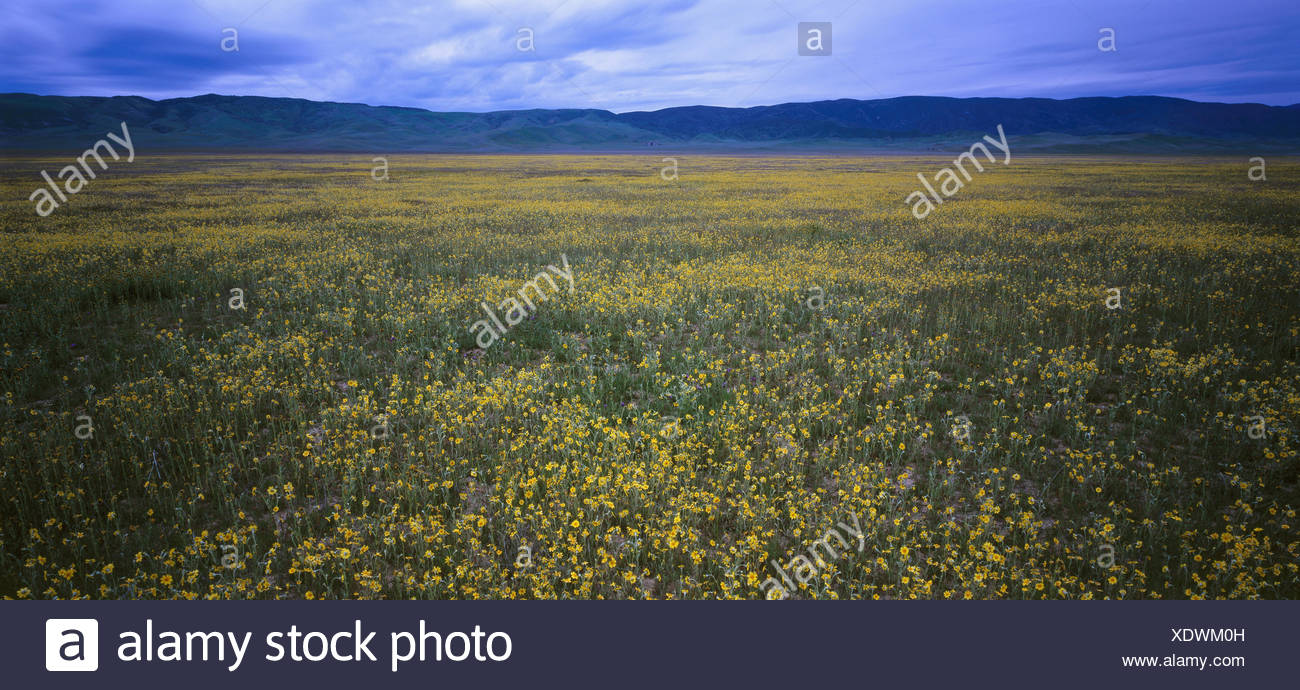 The USA, California, Carrizo Plain national park, mountain landscape, flower meadow, North America, scenery, mountains, deserted, nature, vegetation, flower meadow, flowers, blossom, period of bloom, plants, spectacle of nature, width, distance, seclusion, rest, Idyll, freedom, harmony, - Stock Image