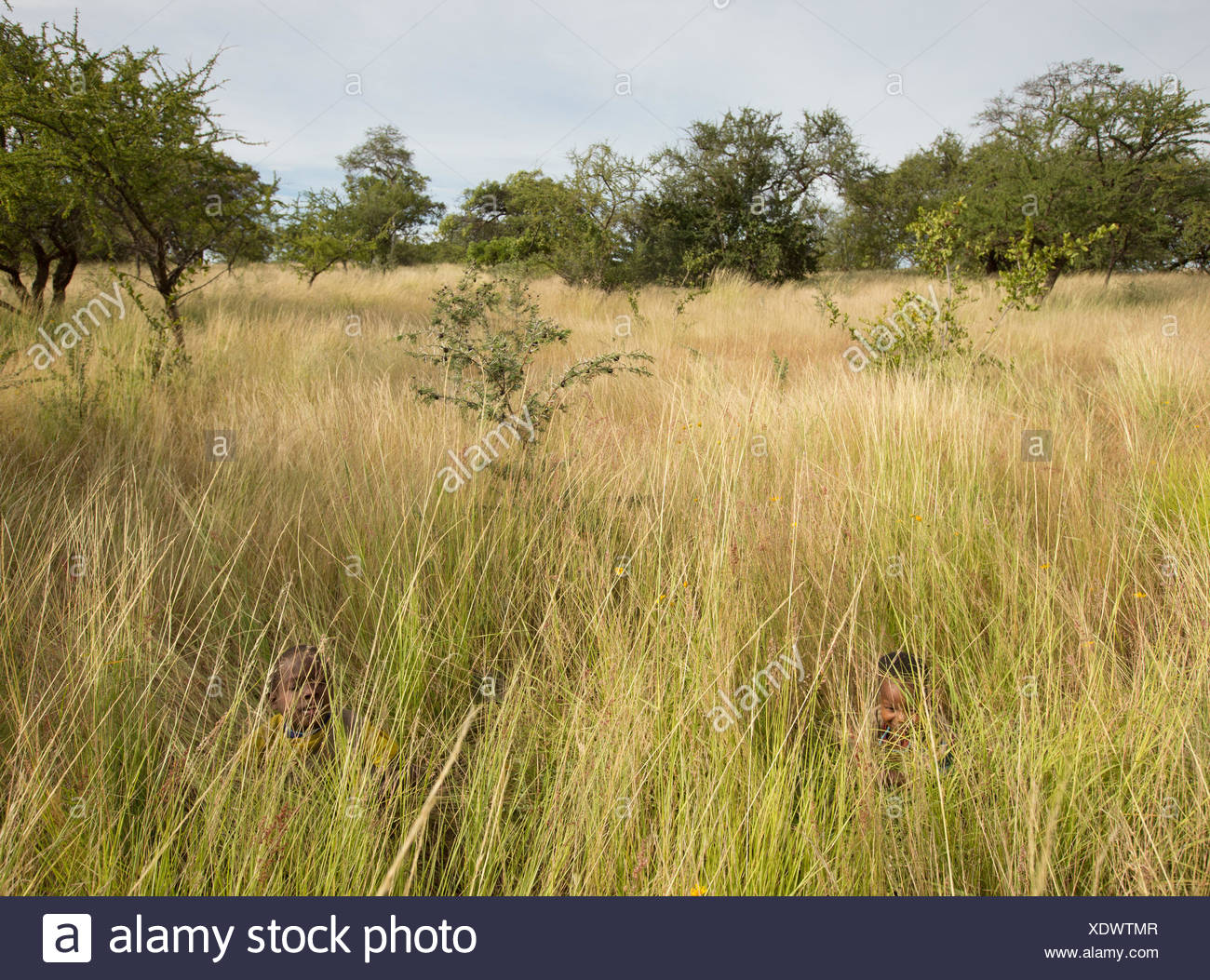 Hadza children playing hide and seek in the high grass. - Stock Image
