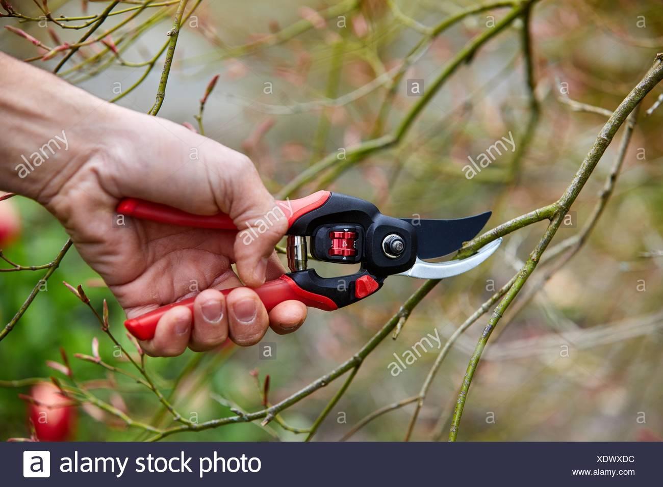 Gardener with hand tool, Pruner, Aiete Park, Donostia, San Sebastian, Gipuzkoa, Basque Country, Spain - Stock Image