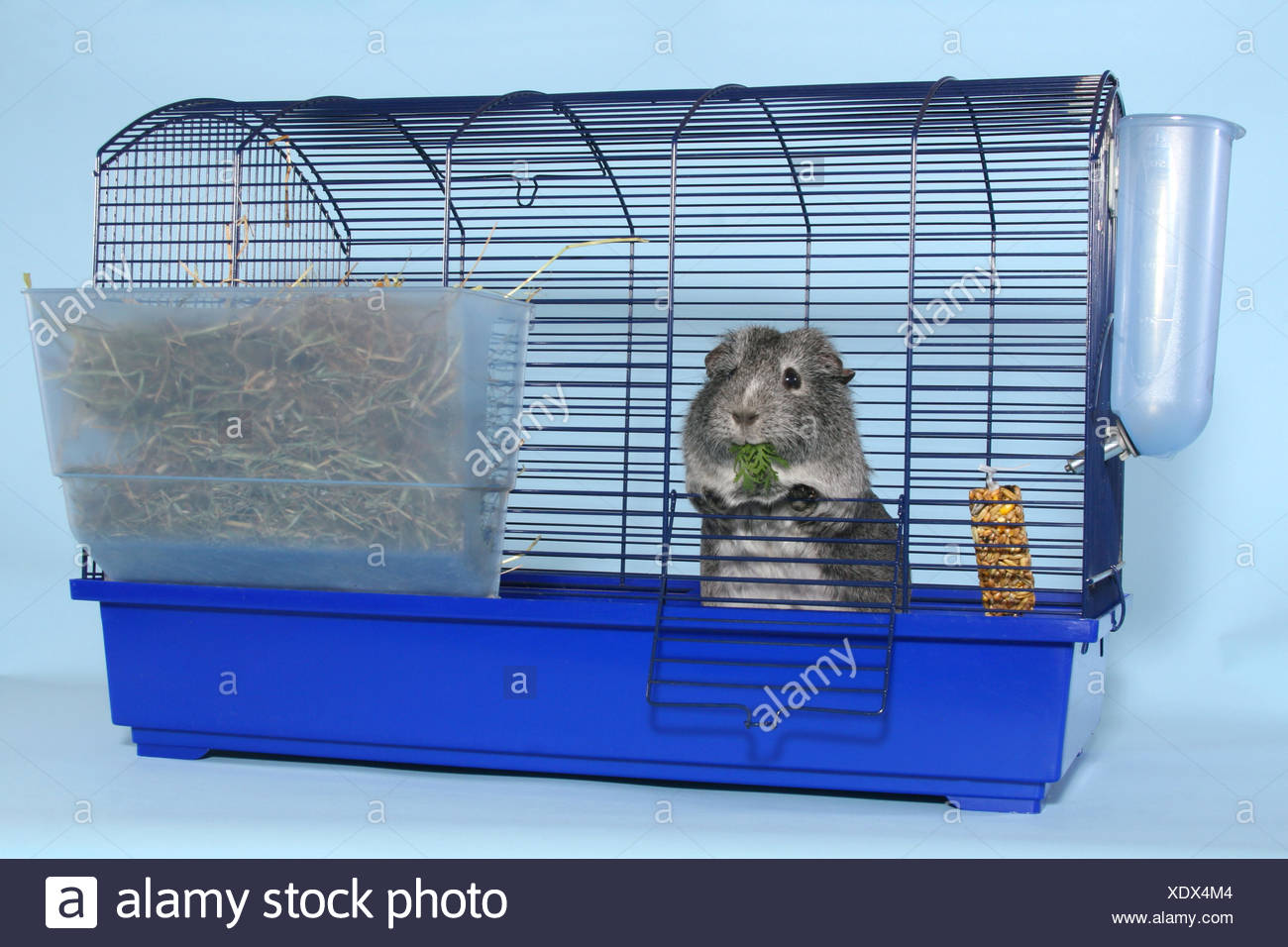 Best Guinea Pig Cage Stock Photos & Guinea Pig Cage Stock Images - Alamy IH97