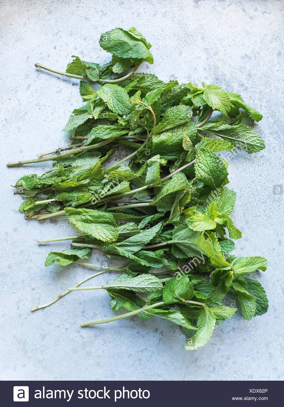 Overhead view of stems of mint leaves - Stock Image
