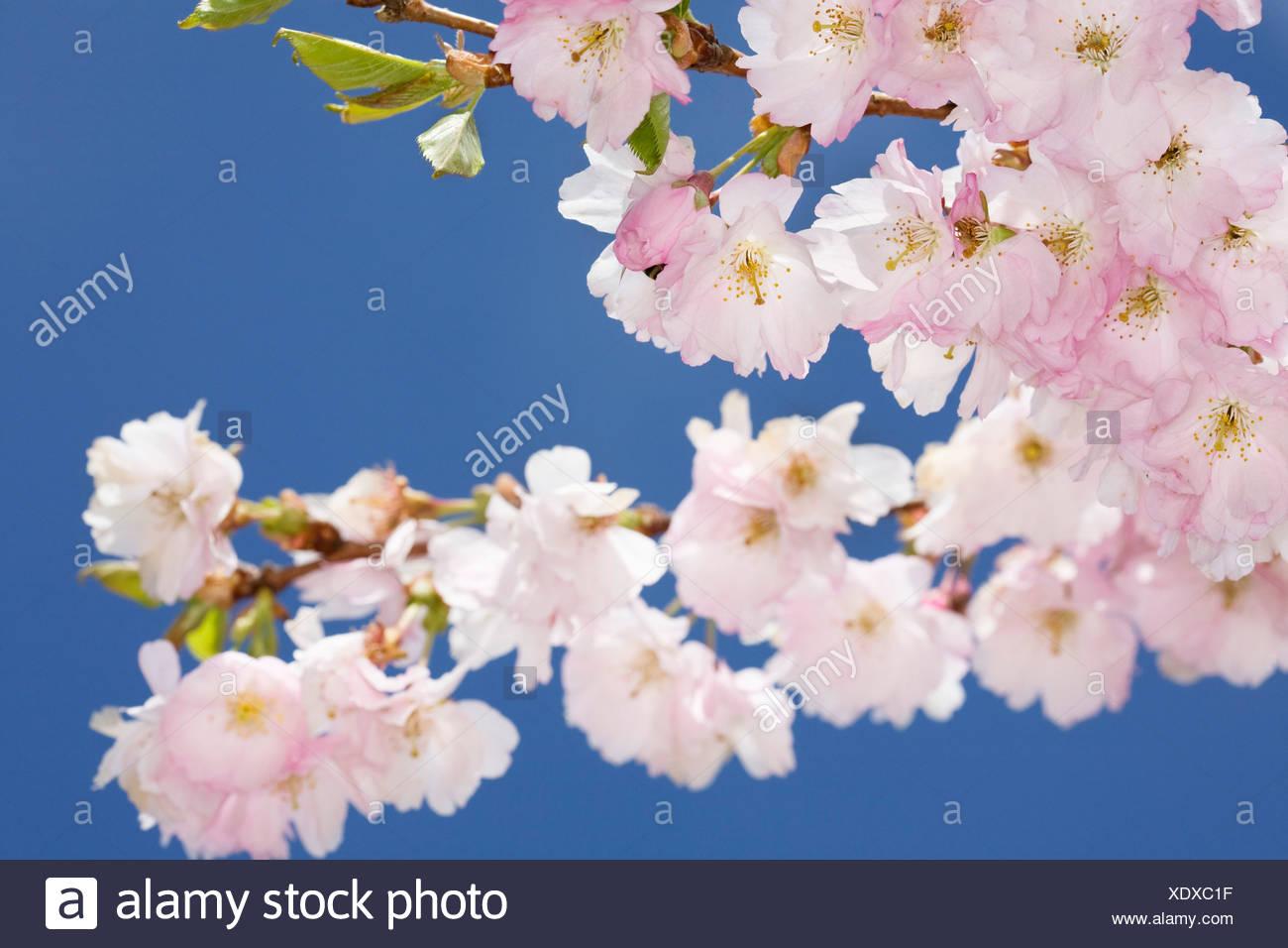 Spring Flowers In Europe Germany Stock Photos & Spring Flowers In ...