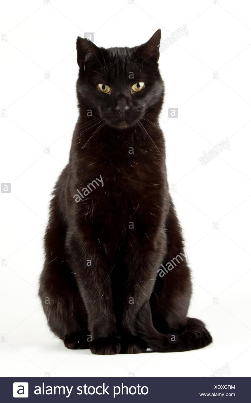 Black cat, tomcat - Stock Image