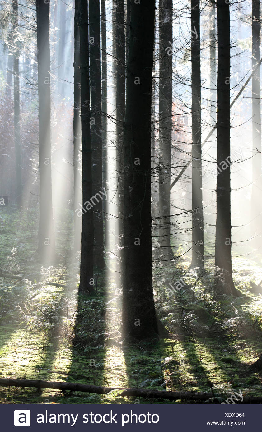 New Kätwin, Germany, raking light in the forest Stock Photo