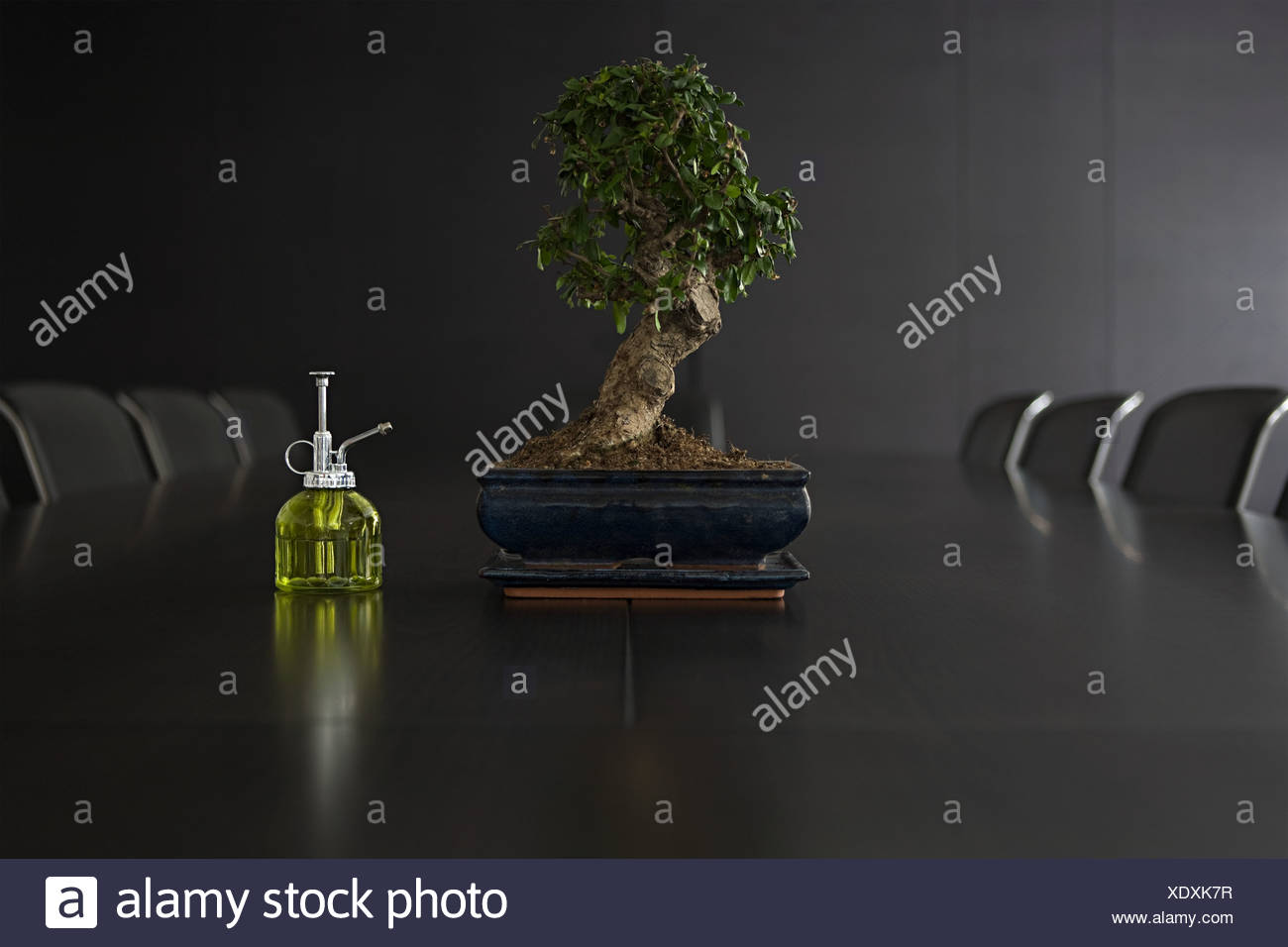 Bonsai tree on a conference table - Stock Image