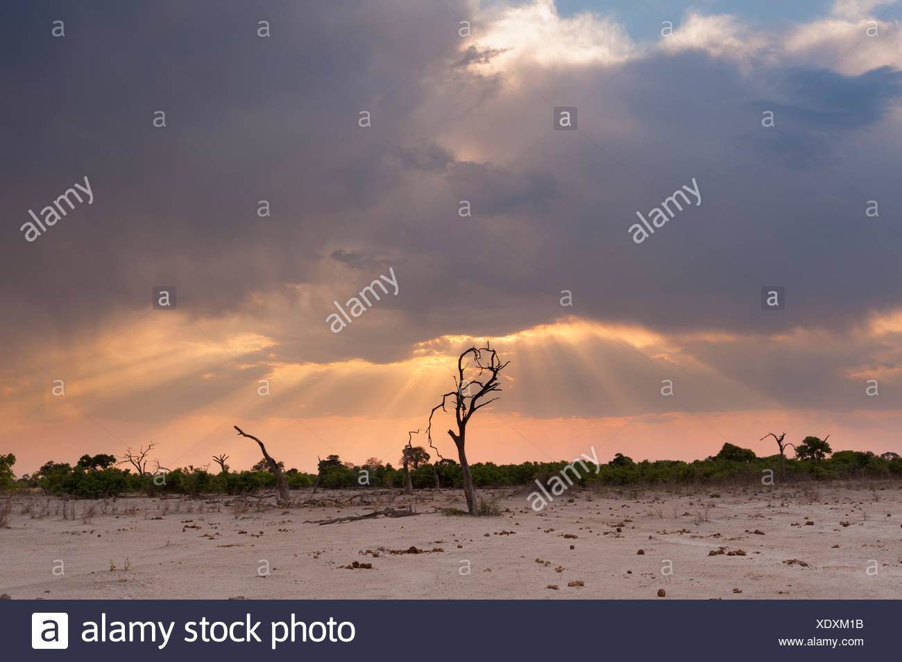 Savuti Marsh at sunset. Stock Photo