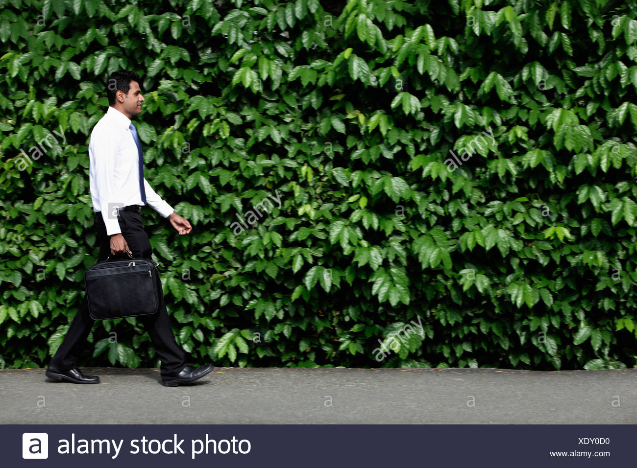 Indian man walking in front of green leafy hedge. - Stock Image