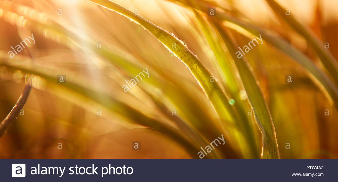 Abstract Grass Background - Stock Image