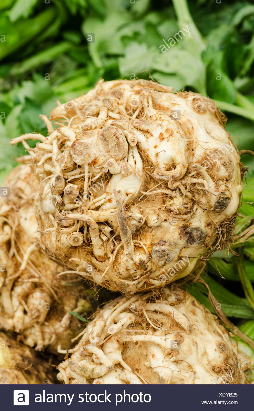 Freshly harvested celeriac (Apium) at the weekly farmers' market in Freiburg im Breisgau, Baden-Wuerttemberg, Germany, Europe Stock Photo