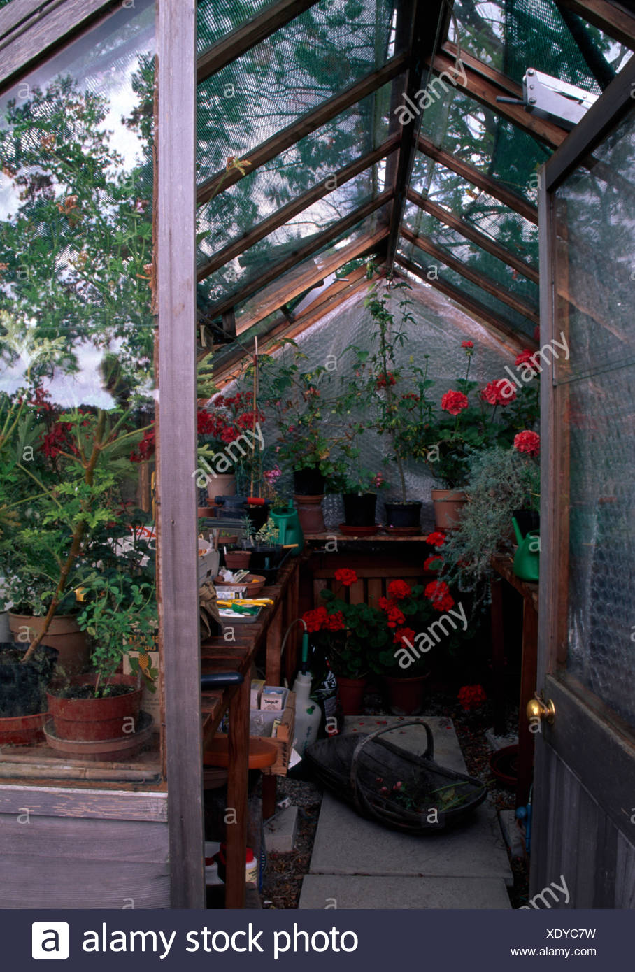 View through an open greenhouse door of red geraniums in pots on shelves - Stock Image & Greenhouse Door Open Stock Photos \u0026 Greenhouse Door Open Stock ...