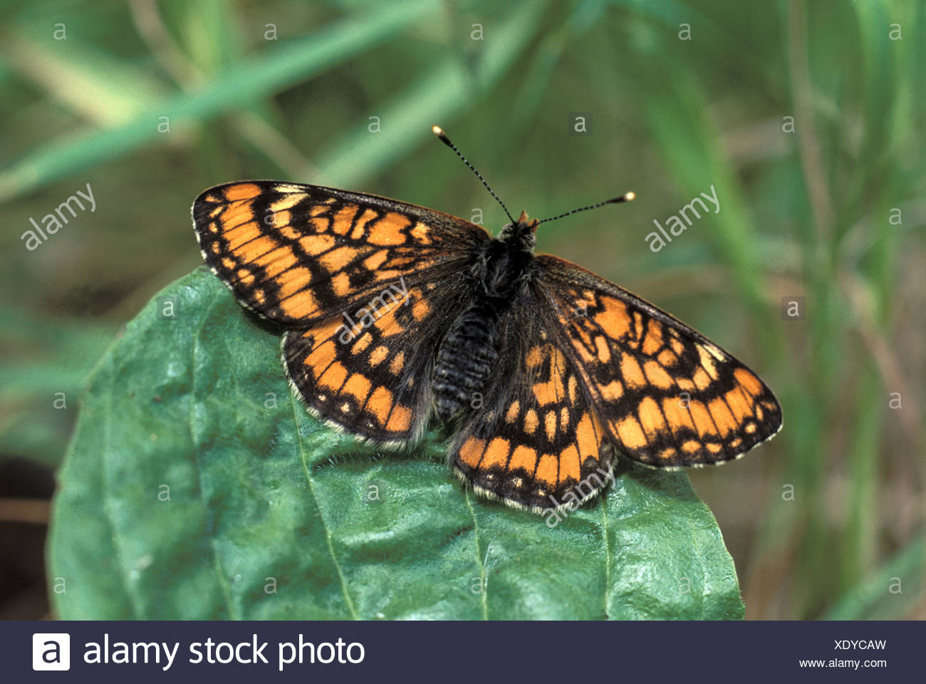 animal animals butterfly butterflies insect insects invertebrate