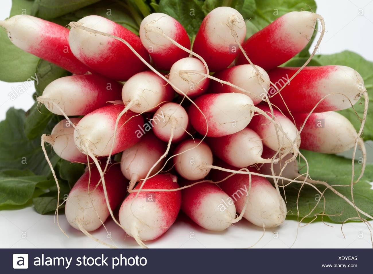 Oval red and white Radish on white backgrpound. - Stock Image