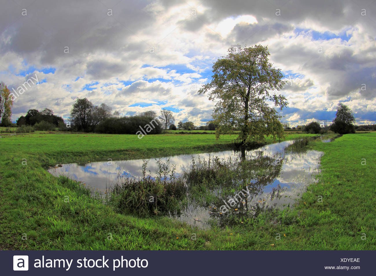 pastureland with tree, creek , fields and cloudy sky, Germany, Baden-Wuerttemberg, Ortenau Stock Photo