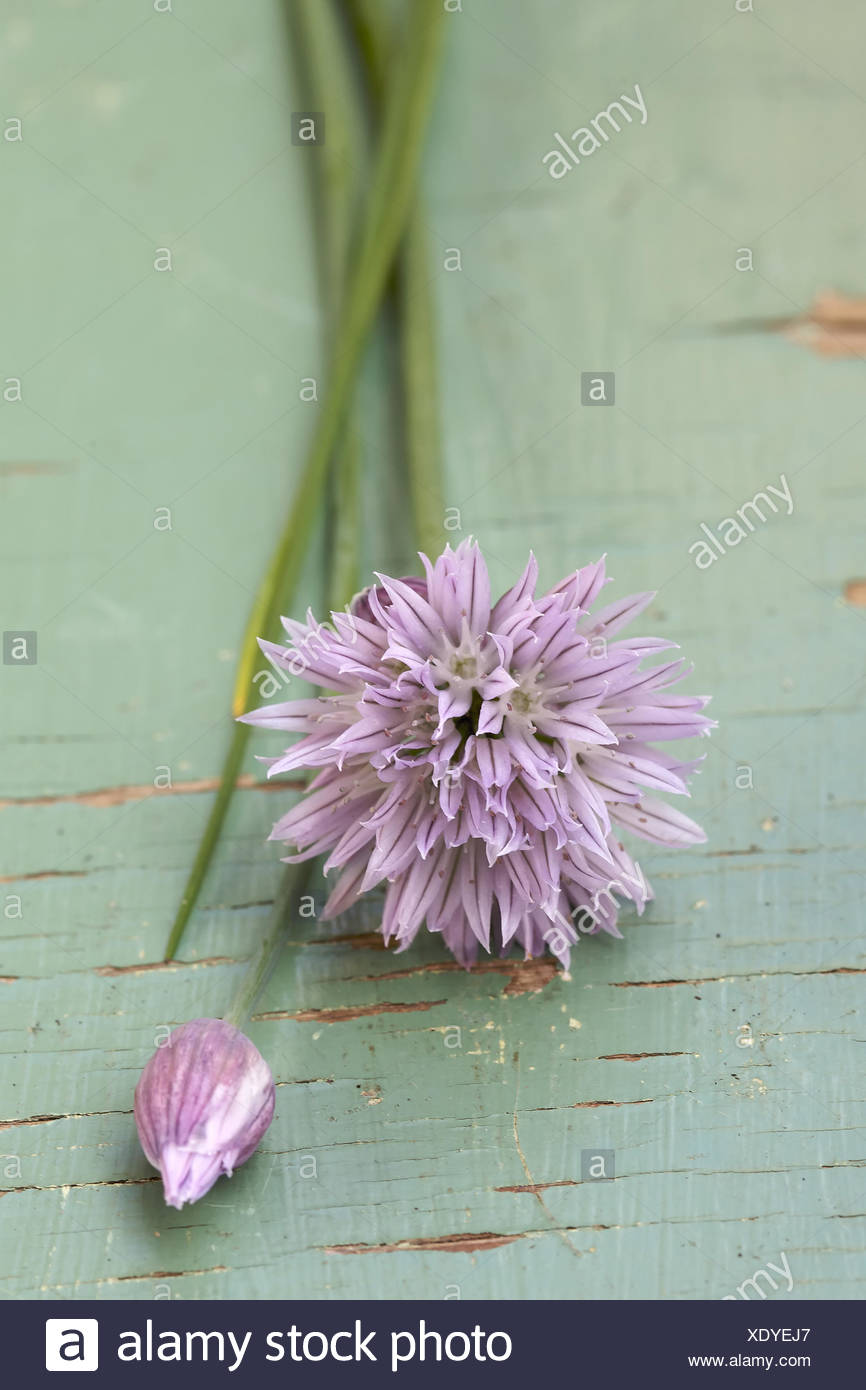 Chives with blossom, close-up, Stock Photo