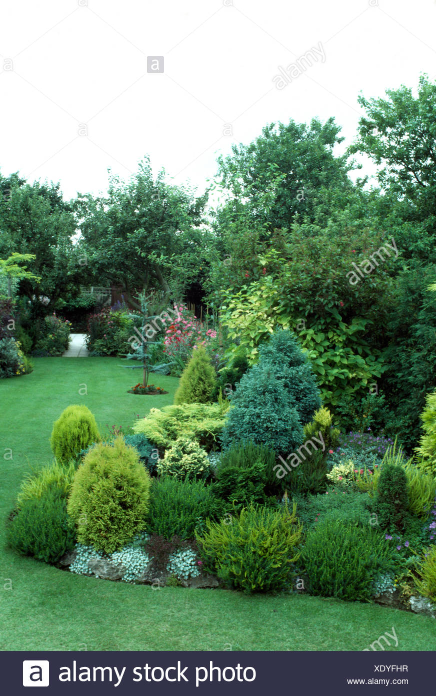 Low growing conifers in a border beside lawn in a well tended suburban garden - Stock Image