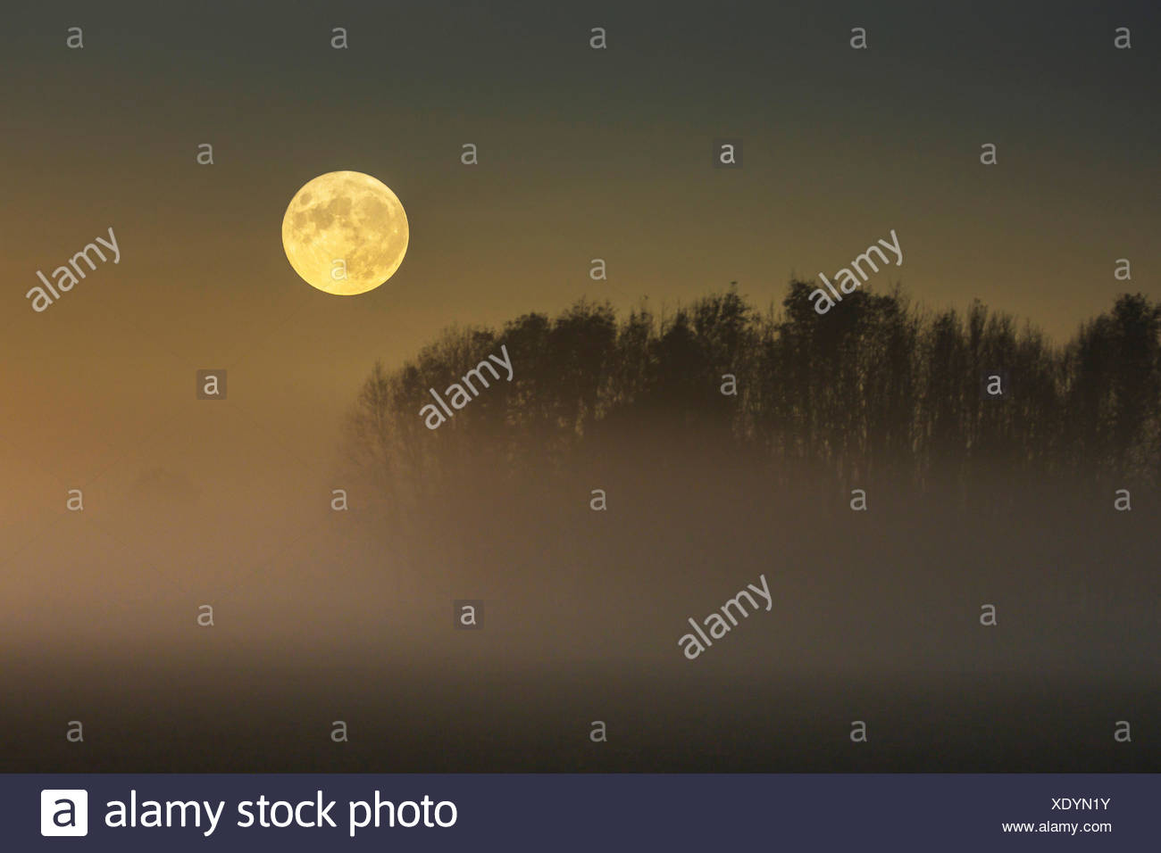 Vollmond ueber im Moor aufsteigendem Bodennebel, Deutschland, Bayern, Grabenstaetter Moor   full moon over ascending mist on moo - Stock Image