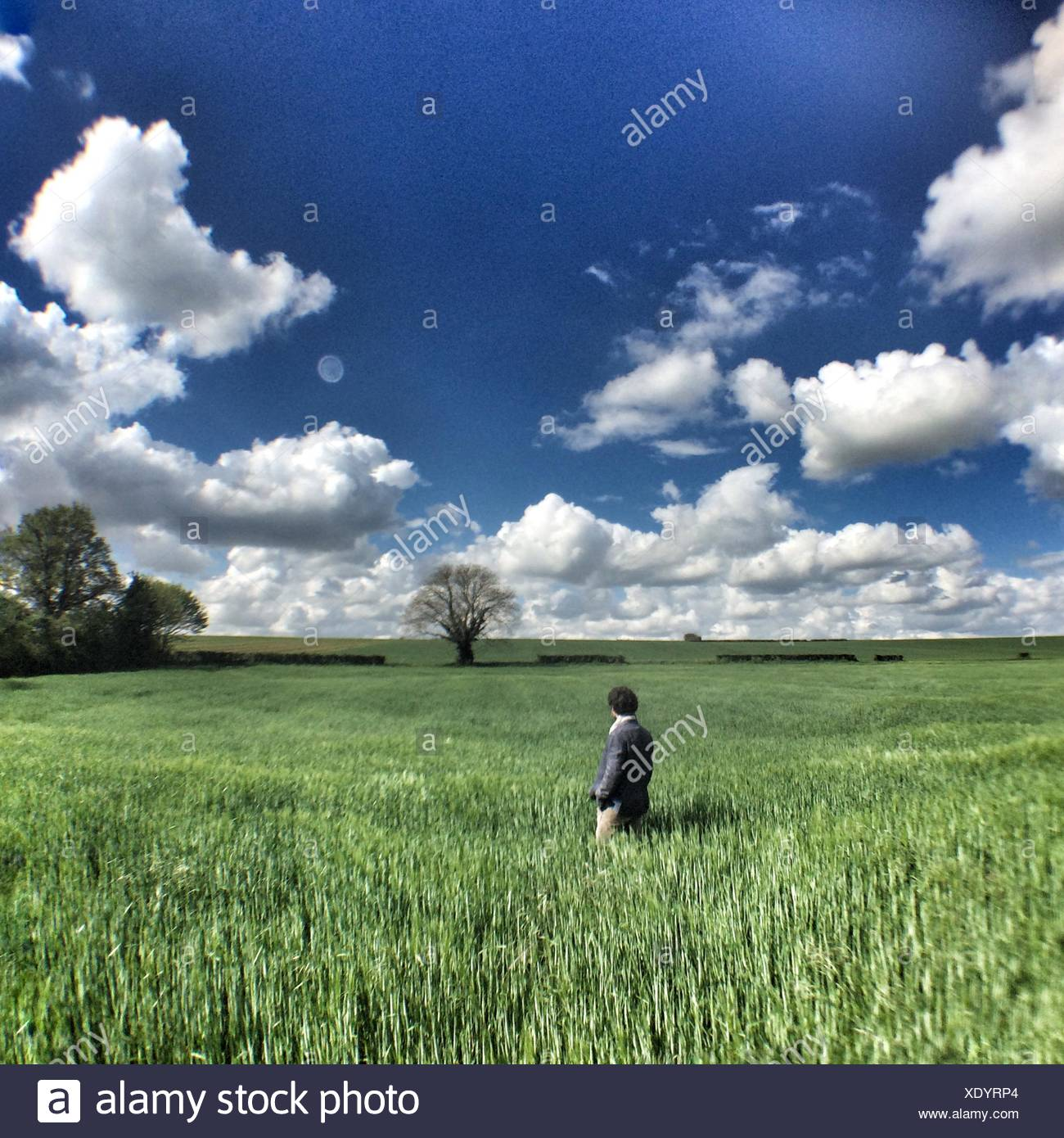 Man Standing In Farm - Stock Image