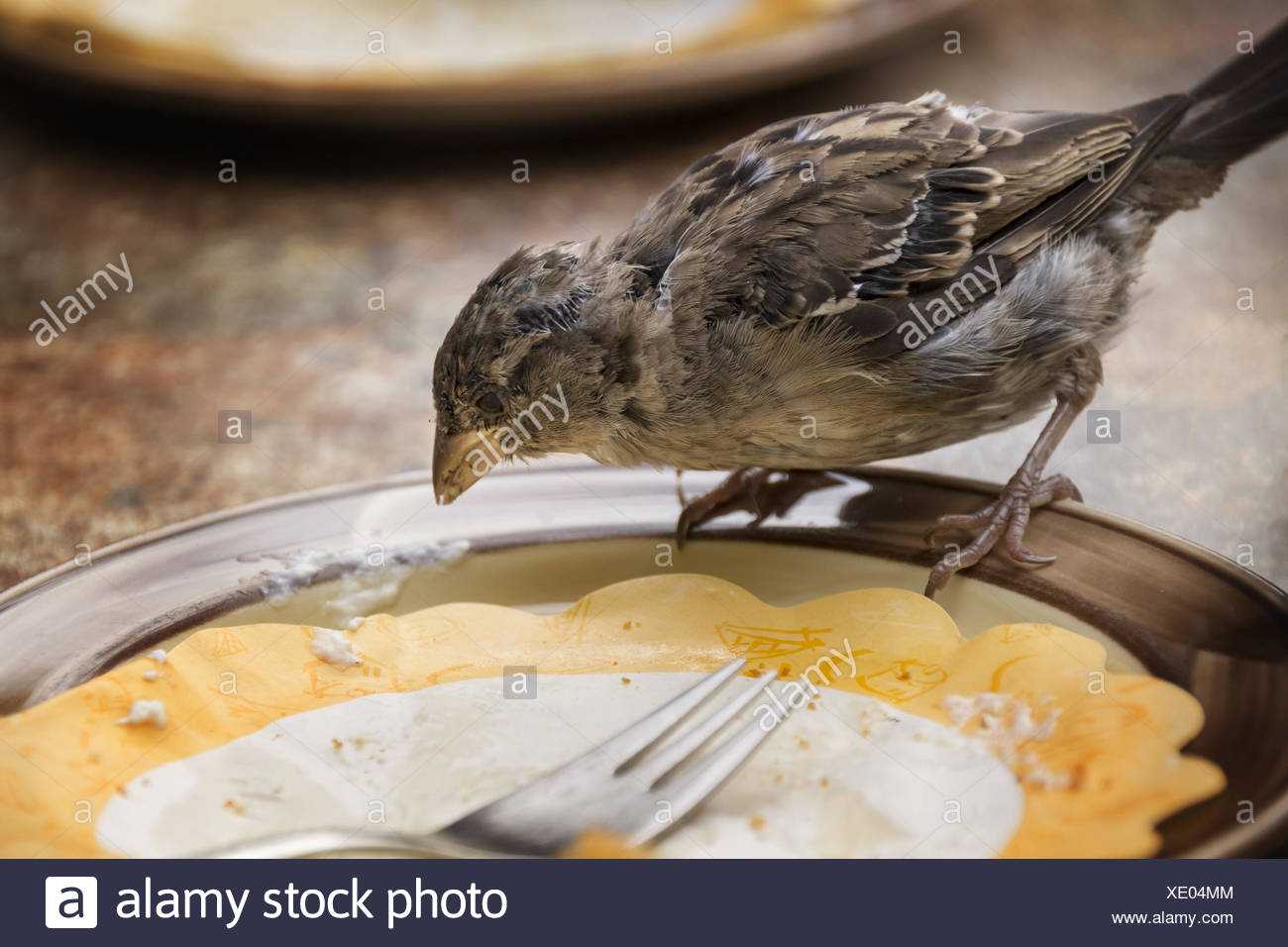 sparrow on a plate - Stock Image
