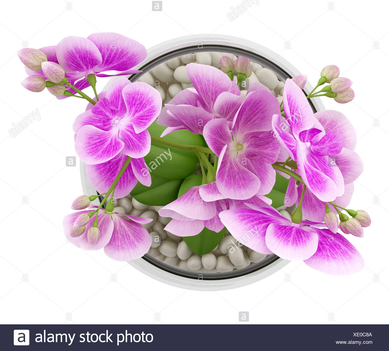 Top View Of Purple Orchid Flower In Glass Vase Stock Photo