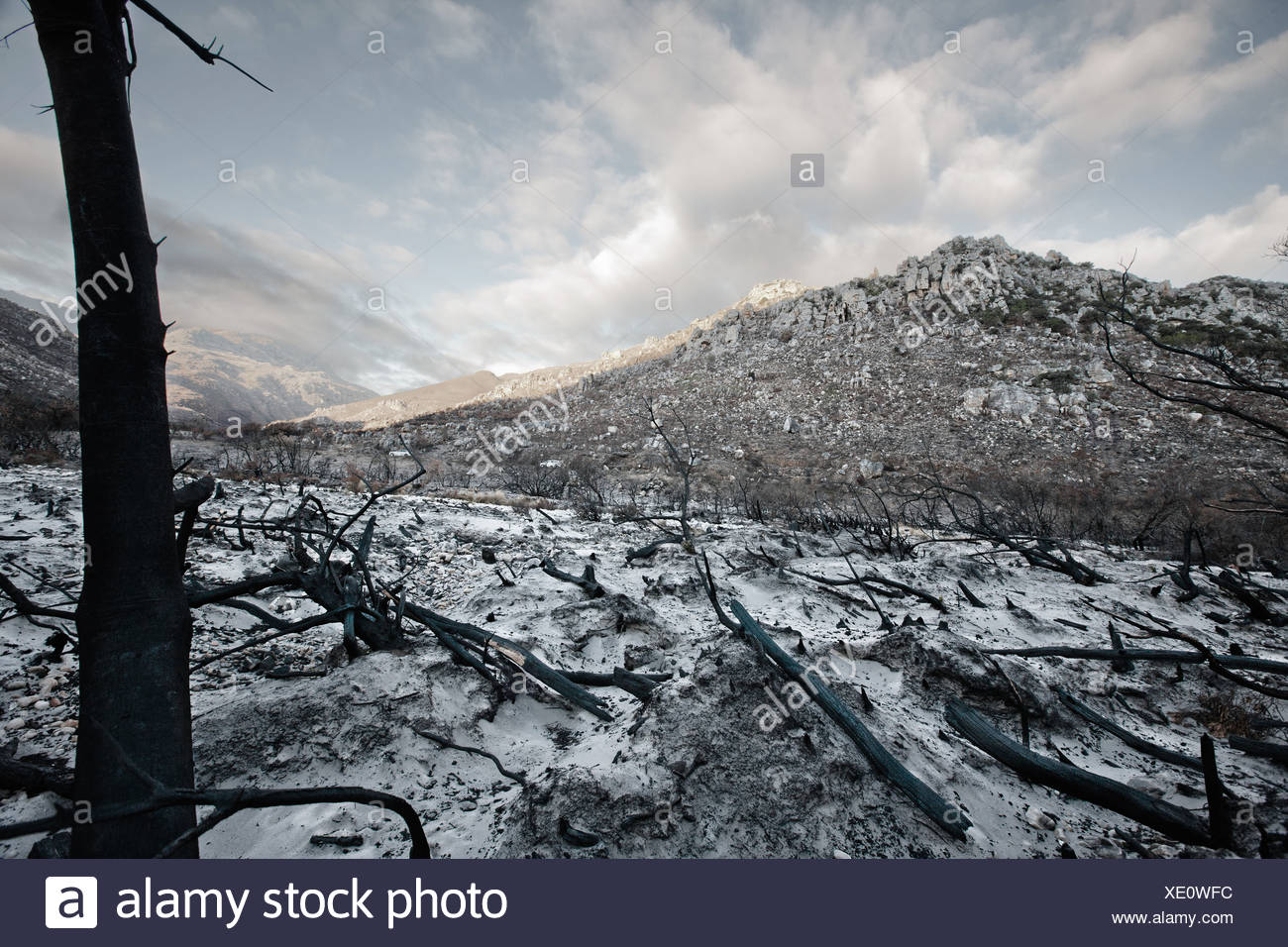 Bare trees and rocks in snowy field - Stock Image