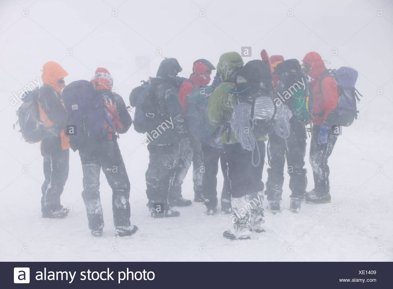 mountaineer's walking through extreme blizzard conditions in the Cairngorm mountains, Scotland, UK in heavy snow Stock Photo