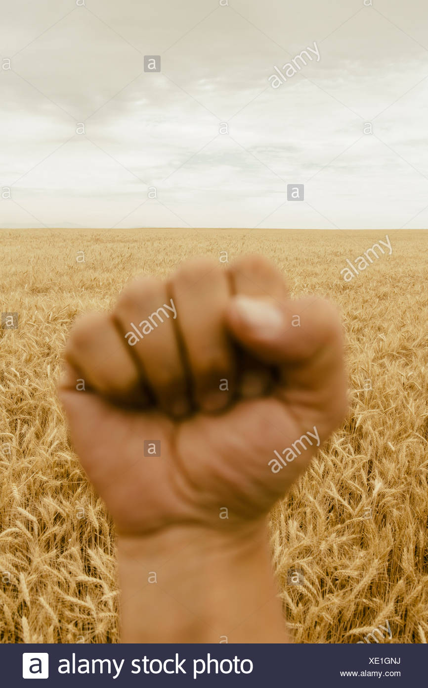 A hand making a fist. A whatfield. A gesture of defiance. - Stock Image