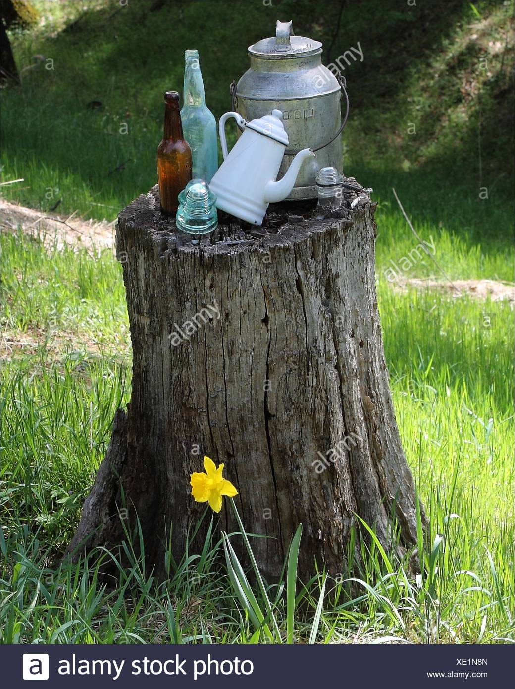 Old bottles, and more mix with an old wood stump in Pleasant Valley, California, USA - Stock Image