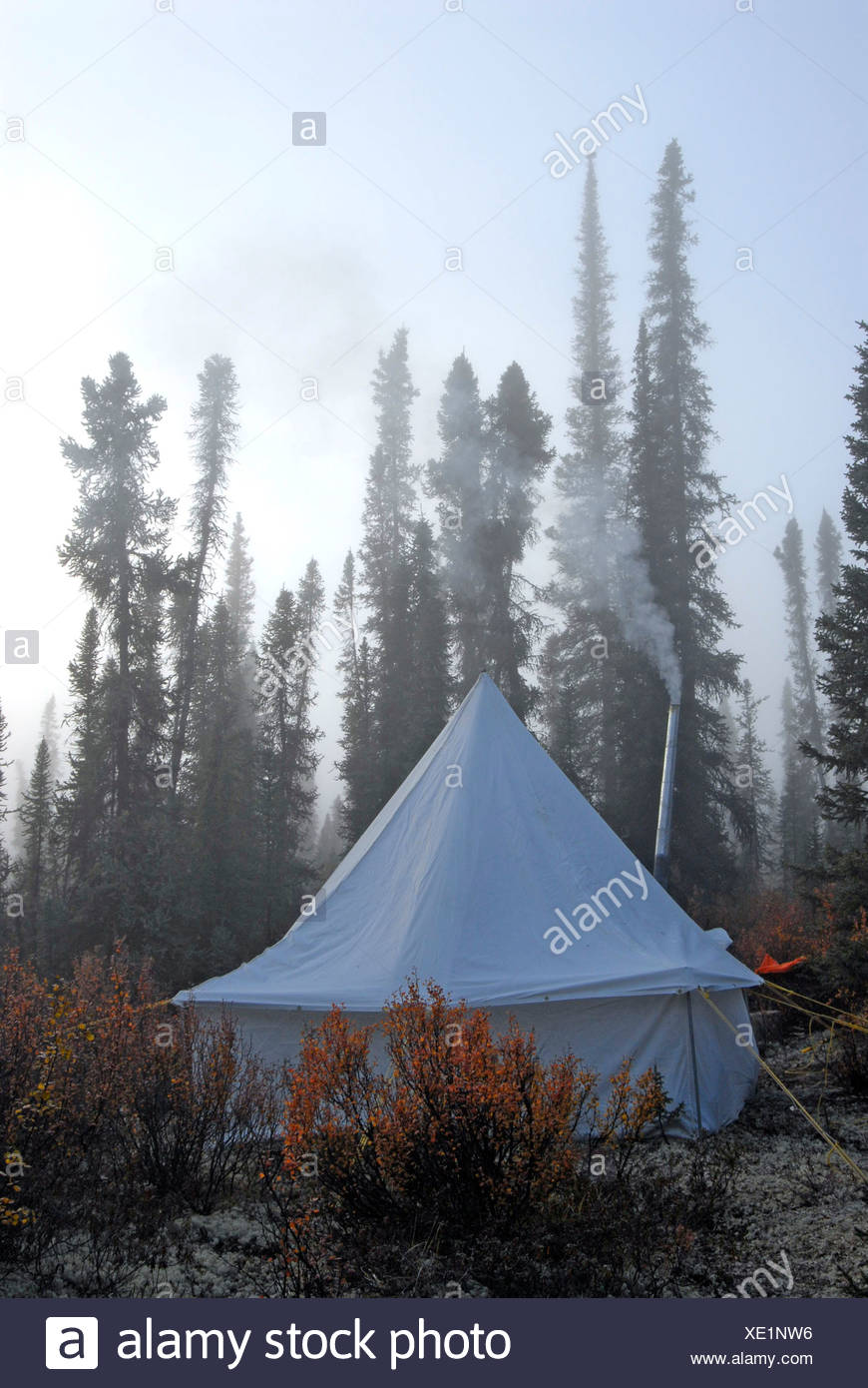 Camping-wall tent set up in middle of woods  Foggy morning