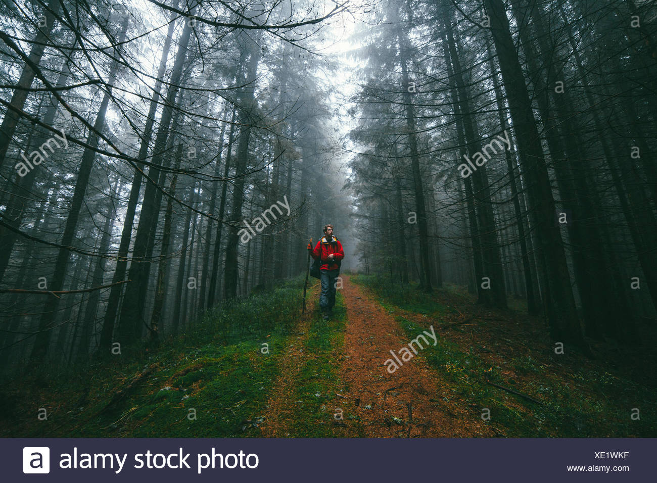 Hiker in forest - Stock Image