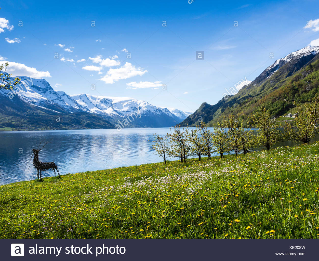 View of snow-covered mountains, fjord and apple trees in bloom, spring, Hardangerfjord near Lofthus, Hardanger,  Norway, Scandinavia, Europe - Stock Image