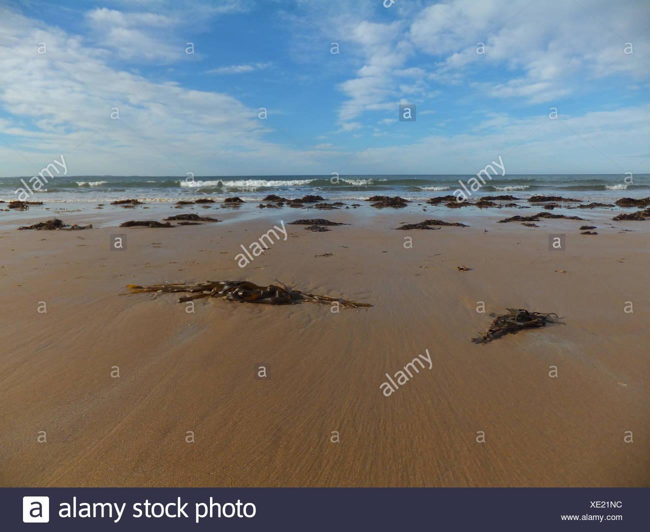 Seaweeds On Beach Against Cloudy Sky - Stock Image