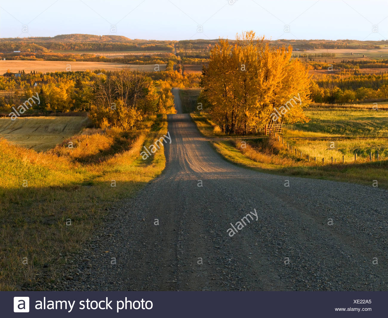 Agriculture - A gravel country road leading to the Red Deer River after sunrise on an Autumn morning / Alberta, Canada. - Stock Image