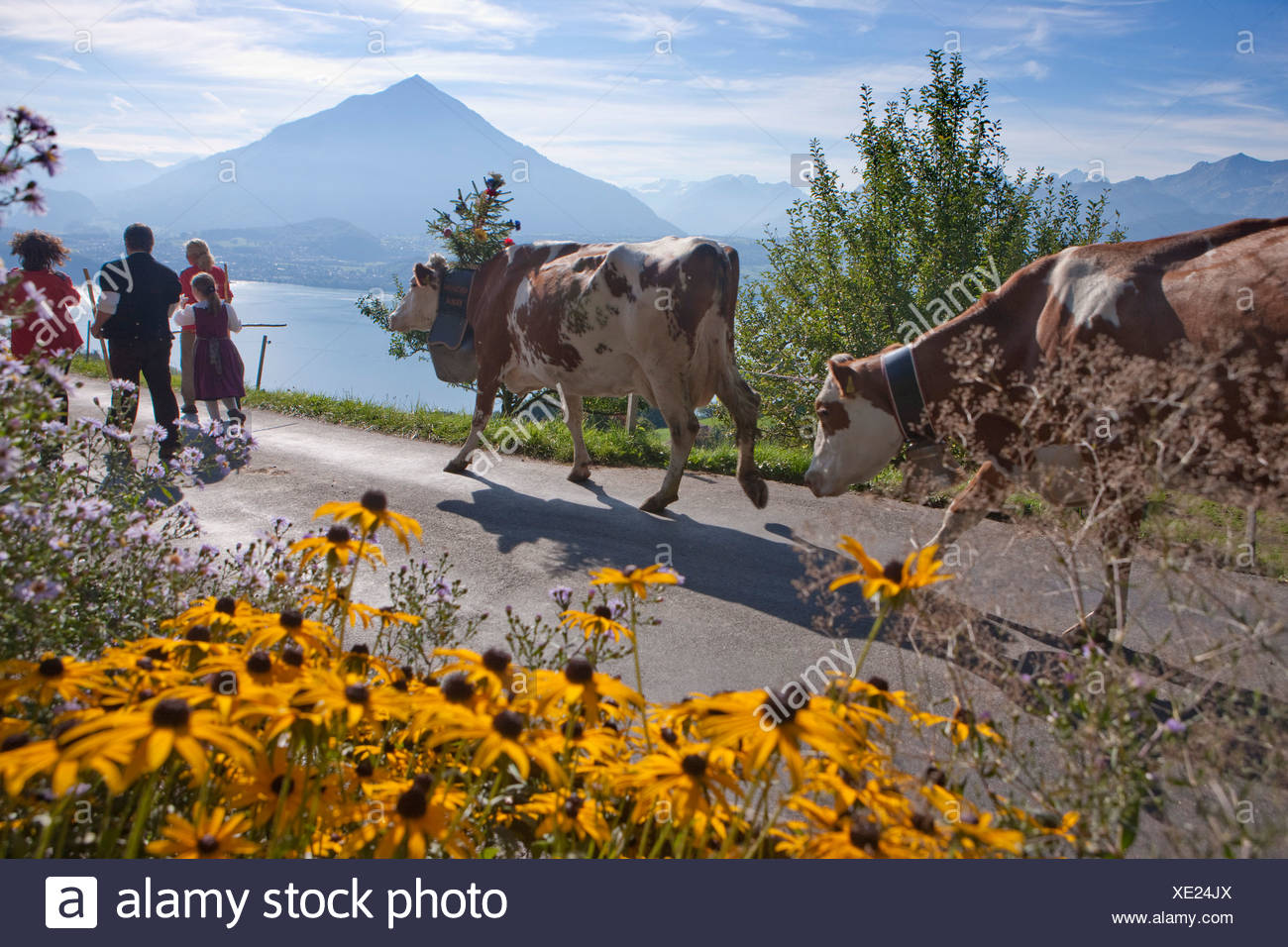 alpine deduction, Justistal, lake of Thun, Niesen, tradition, folklore, national costumes, agriculture, national costumes, natio - Stock Image