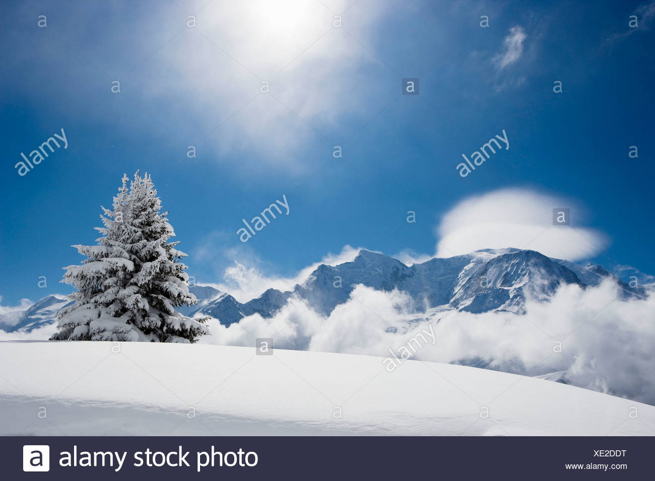 Fir tree covered in fresh snow - Stock Image