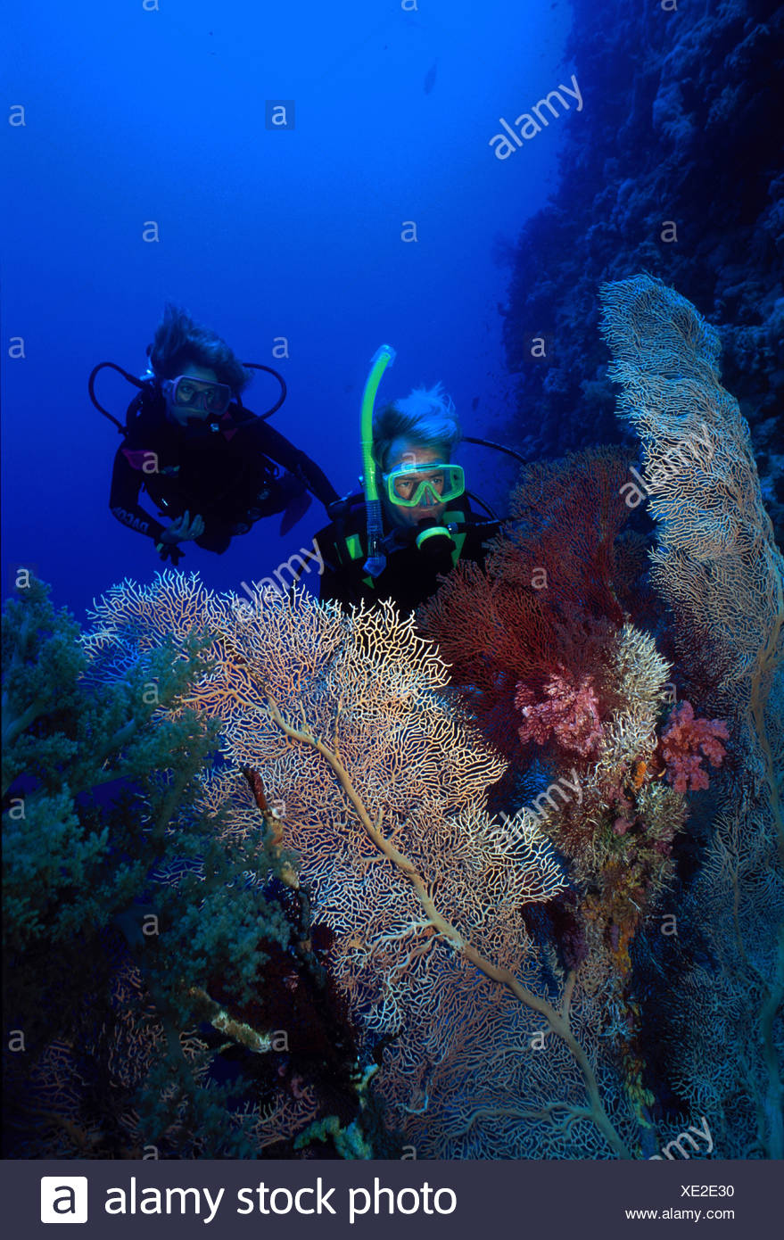 A PAIR OF SCUBA DIVERS GAZE AT SEAFANS ON A WALL IN THE RED SEA - Stock Image