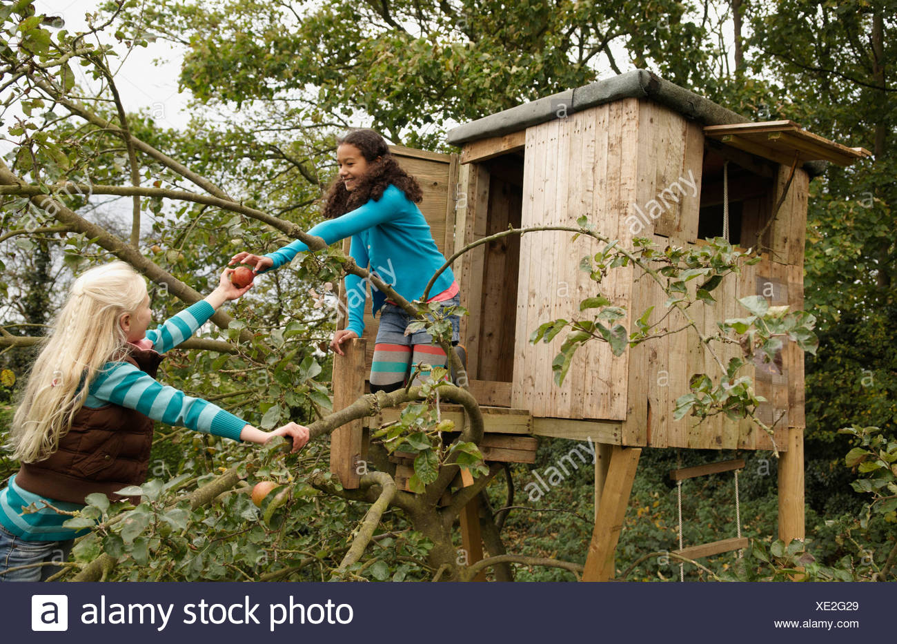 Girl in tree passing apple to friend - Stock Image