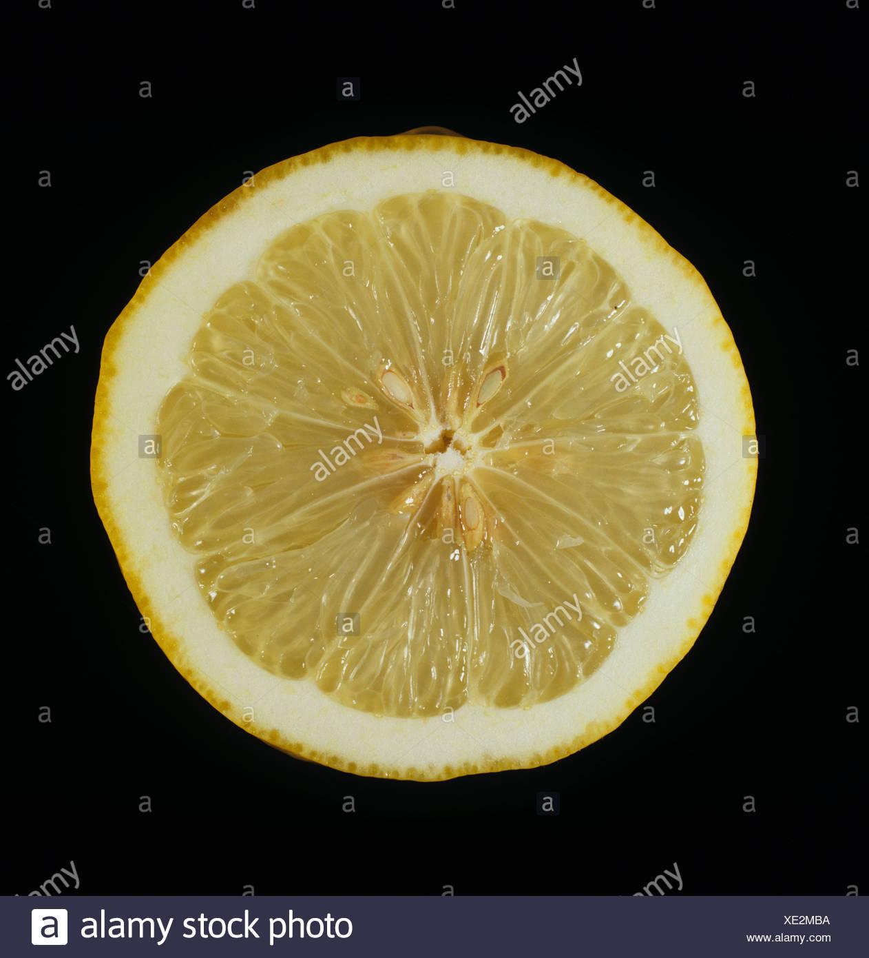 Cut section of a citrus fruit lemon variety Ponderosa - Stock Image