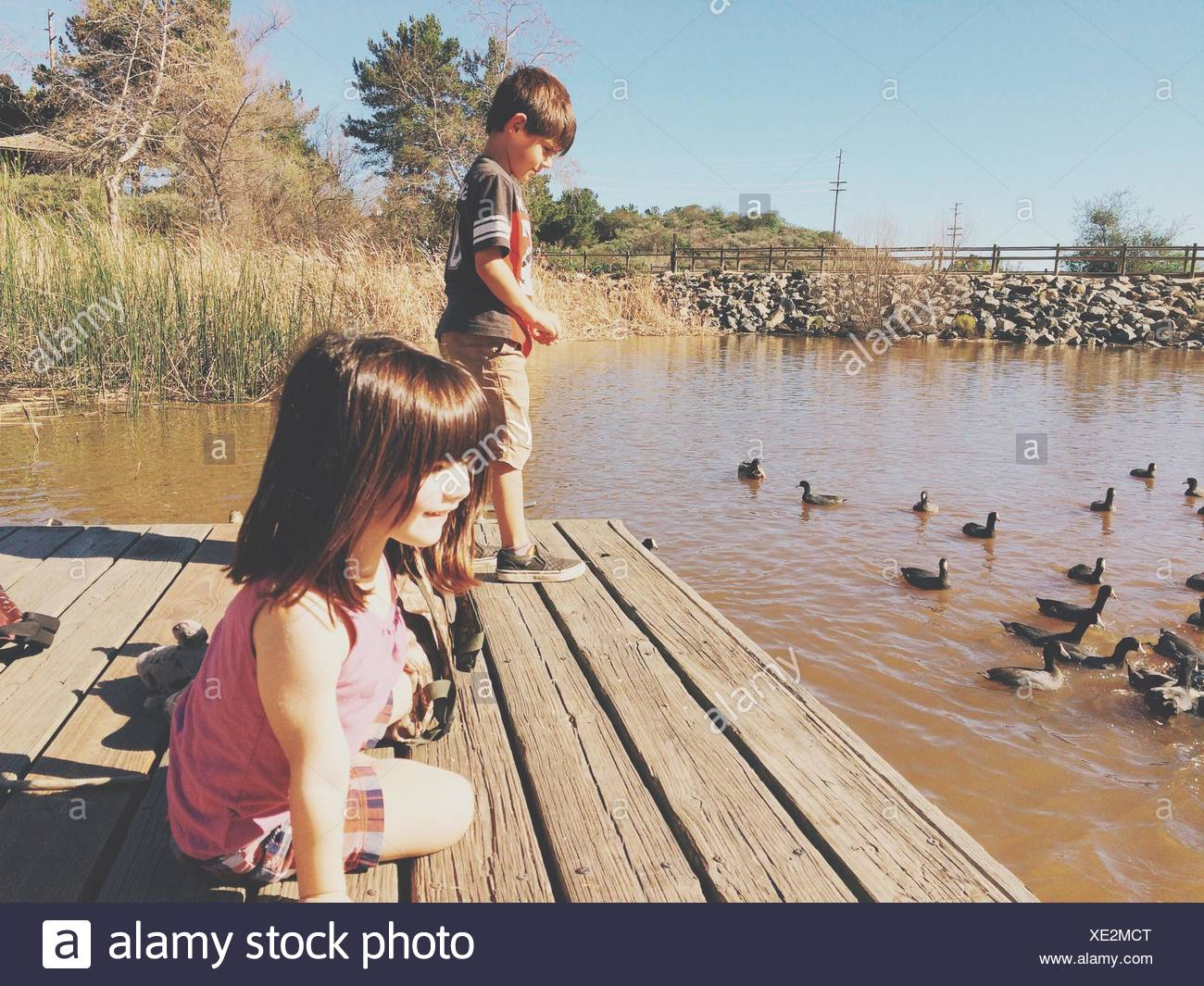 Sibling On Jetty With Coots In Pond - Stock Image